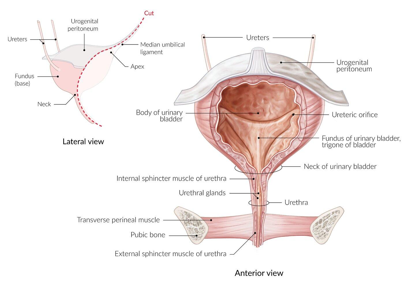 Prostatitisz tünetei férfiakban segíthetnek a masszázsban
